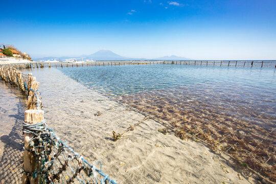 Seaweed farm in the ocean with Gunung Agung vulcano in the background at Nusa Penida, Bali, Indonesia
