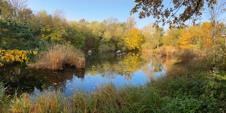Autumn in the forest in London, Rotherhithe Surrey area