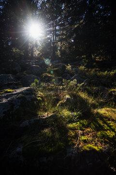 rays of light illuminate the undergrowth