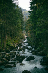 River flowing through forest in Trentino-Alto Adige region, Italy