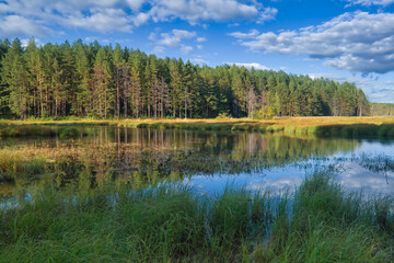 Summer landscape, forest trees are reflected in calm river water against a background of blue sky and white clouds.