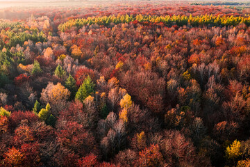 Stunning aerial view of red autumn forest at sunset, Poland