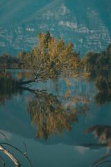Vertical shot of Natural Reserve Sebino nature, trees reflected in the water