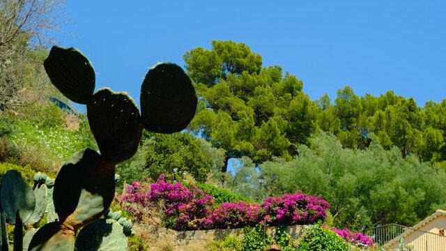 Mickey's ears flower