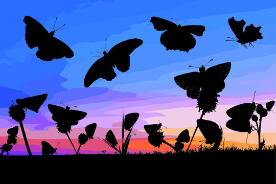 Collection of 18 silhouette of butterflies