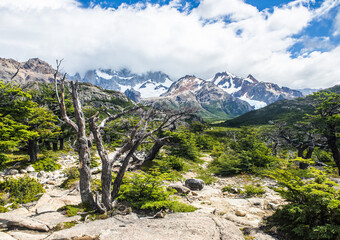 Andes mountains a dead tree in Argentina