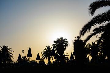 Zachód słońca z palmami