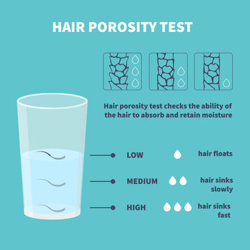 Natural hair porosity float test infographics. Strand with low, normal and high cuticle porosity in a glass of water. Anatomical structure scheme vector illustration.