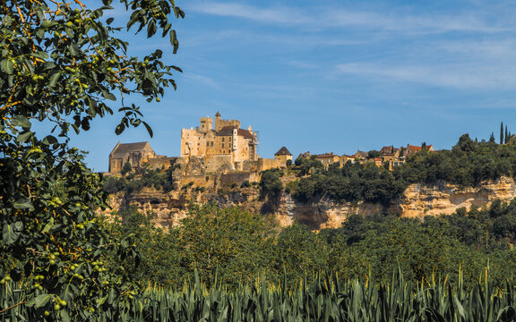 Chateau de Beynac, medieval castle  rising on a limestone cliff above the River Dordogne in the village of Beynac-et-Cazenac. Walnut tree in the foreground. Dordogne, Aquitaine, France.