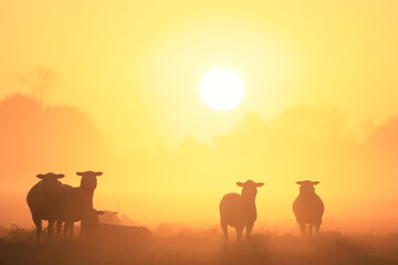 sheep silhouettes in fog at sunrise