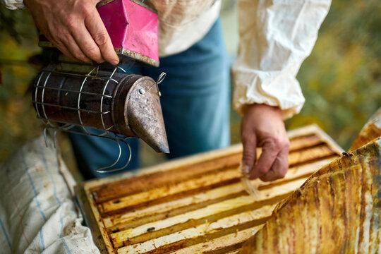 male caucasian beekeeper looks after bees, checks honey.beekeeper exploring honeycomb