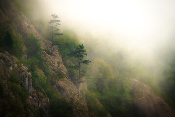 misty morning in the mountains