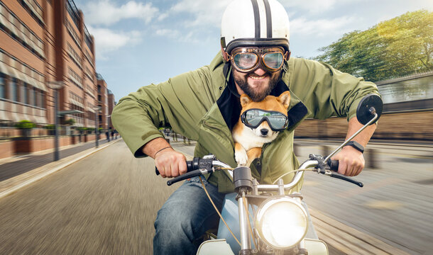 Man and his dog riding a motorcycle in the city