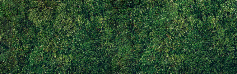 Natural green moss background. Top view. Copy space. Biophilic design. Organic, wild nature...