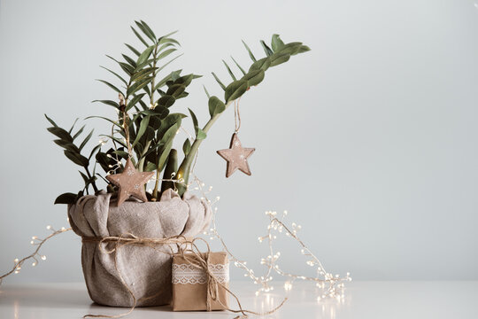 Christmas tree made from houseplant. Gift boxes packed in paper, decorated with lace and twine. Eco Christmas decor