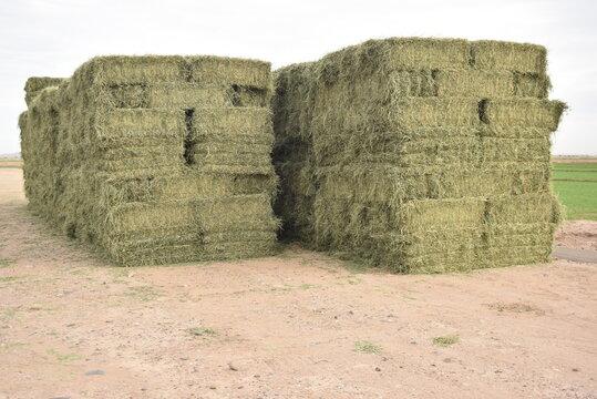 alfalfa, baled alfalfa, livestock silage, livestock fodder,