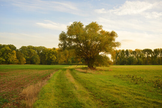 Beautiful autumn season landscape meadow and single tree on a field