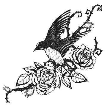 Bird with rose tattoo by hand drawing.Beautiful flower on white background.Anne Harkness rose vector art highly detailed in line art style.Flower tattoo for paint or pattern.