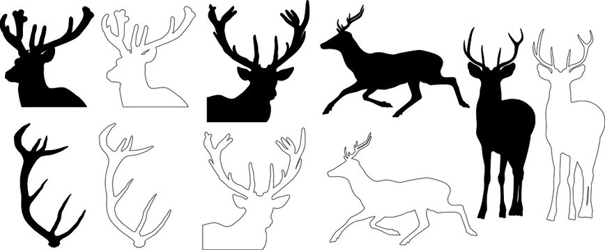 silhouette and outline of Red Deer (Cervus elaphus), vector on white background