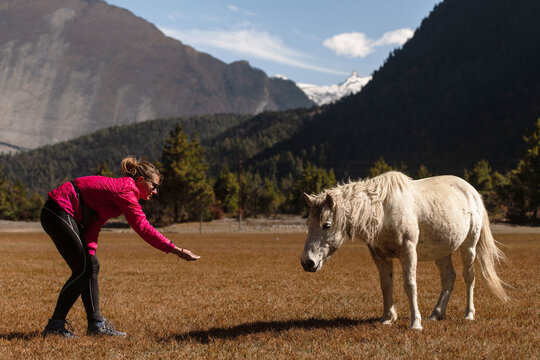 Young woman tourist tries to feed the white horse in Himalayas