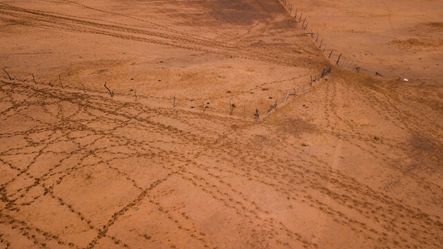 cattle footprints in the desert on the way to watering place