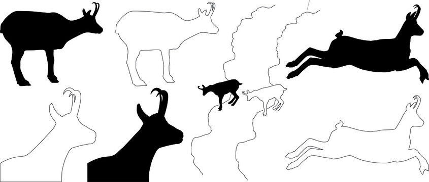 silhouette and outline of Alpine Chamois (Rupicapra rupicapra), vector on white background