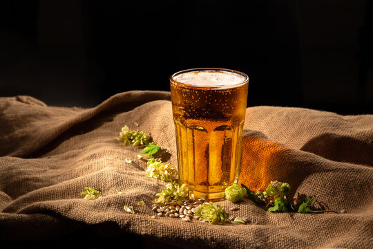 Close up. Glass of cold beer, sunflower seeds, malt, hop on a table with sackcloth on a dark background. Beer ingredients. Fast food and snacks in local brewery pub bar. Oktoberfest. Still life rustic