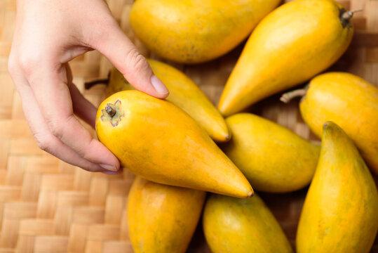 Eggfruit or canistel holding by hand, Thai fruit, In Thai names such as Xiantao, Lamut Khamen or Mon khai