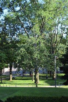 Harvard College Campus View