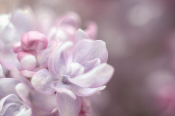 abstract flowers lilac delicate blurry