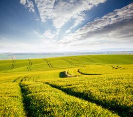 Wall Mural - Idyllic sunlight on the wavy fields. Location place of South Moravia region, Czech Republic, Europe.
