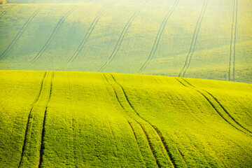 Wall Mural - Idyllic wavy fields in agricultural area on a sunny day. Location place of South Moravian region, Czech Republic, Europe.