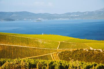 Wall Mural - Attractive summer scene overlooking the vineyards.