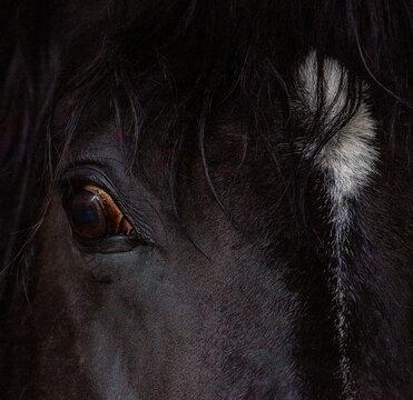Pferd Portrait Ausschnitt quadratisch