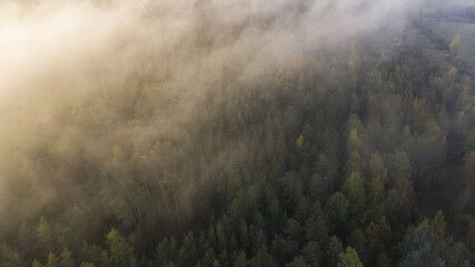 Aerial view of a beautiful forest covered in fog - great for wallpapers