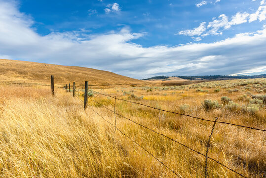 Yellow autumn grass in the steppe, barbed wire fence, hills and green trees in the distance, blue sky with white clouds in the background.