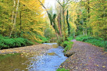 View of a flowing river downstream in a forest with autumn leaves on the trees