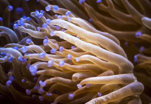Closeup shot of corals underwater in the deep sea