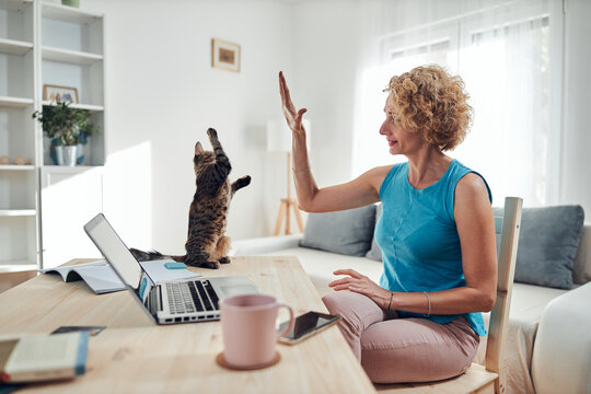 Woman working from home on a laptop / notebook with cat pet with her.