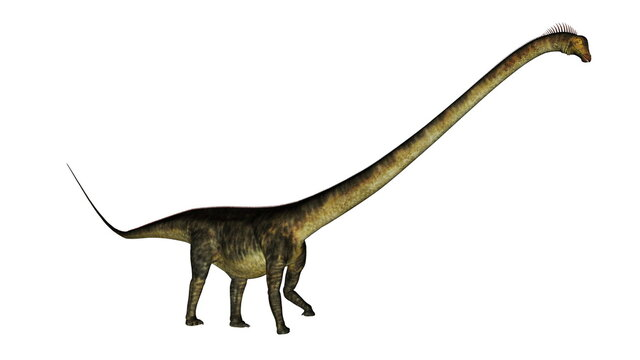 Barosaurus dinosaur walk isolated in white background - 3D render