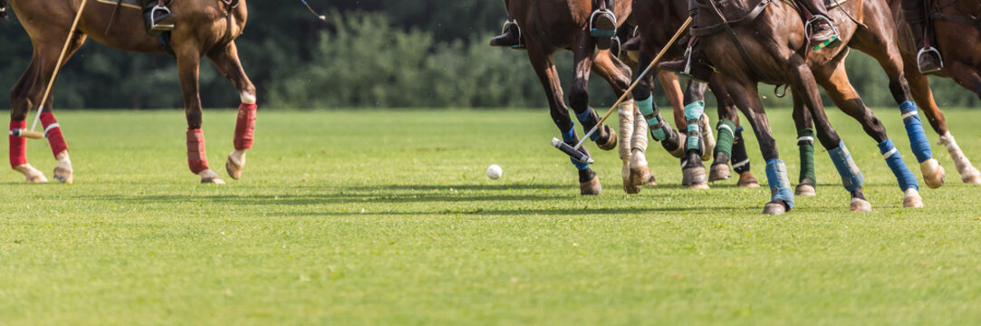 Playing equestrian polo. There are many horse legs and a group of riders in attack with a hammer.