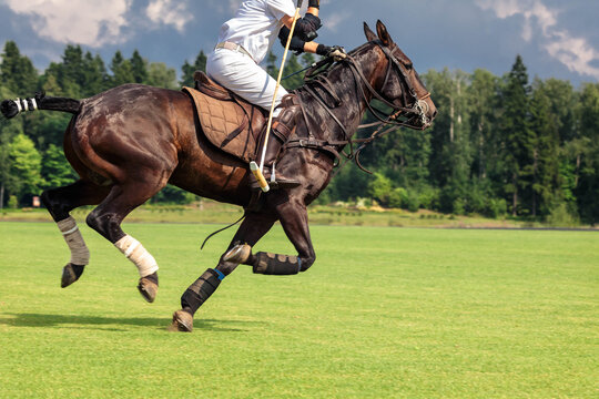 A horse polo player riding a horse with a hammer in his hand jumps into attack for the ball. Summer season, copyspace