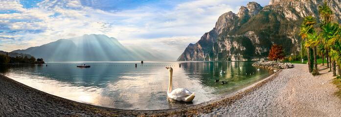 Swan lake. Beautiful morning in amazing Lago di Garda. Riva del Garda, northern Italy