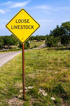 Loose Livestock Portrait