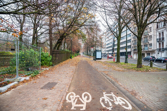 Tree lined bike path along a street in a residential district on a cloudy winter day. Brussels, Belgium.