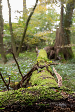 mossy tree trunk in the green forest