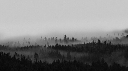 Wall Murals Morning with fog View of the misty woods in Norway