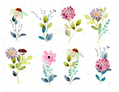 beautiful flower bouquet watercolor collection