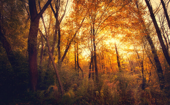 Autumn forest nature
