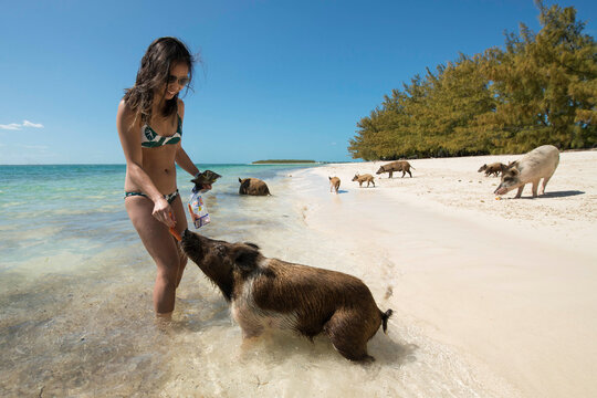 Smiling young woman in bikini feeding carrots to pig at beach